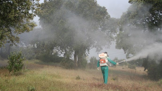 Treatment for control of defoliator insects at Monte de El Pardo