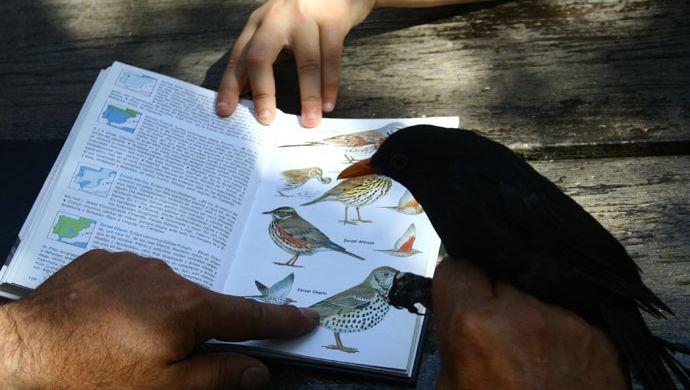 Prácticas de ornitología de campo