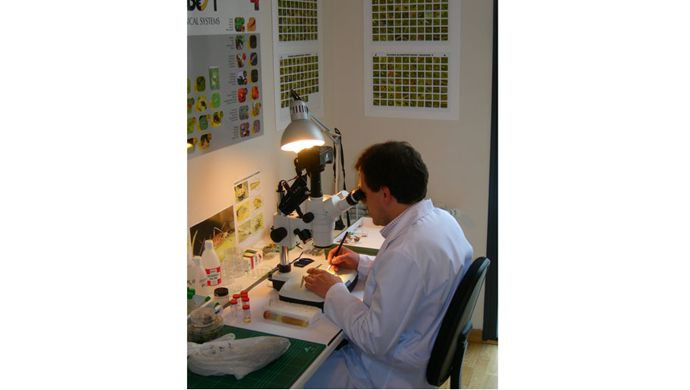 Count of beneficial insects in the laboratory