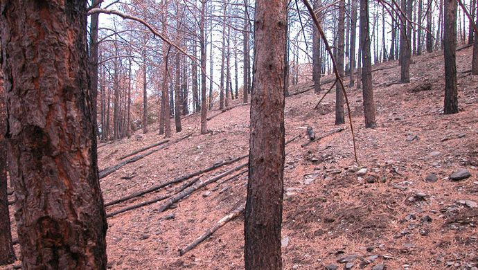 Restoration of areas destroyed by fire