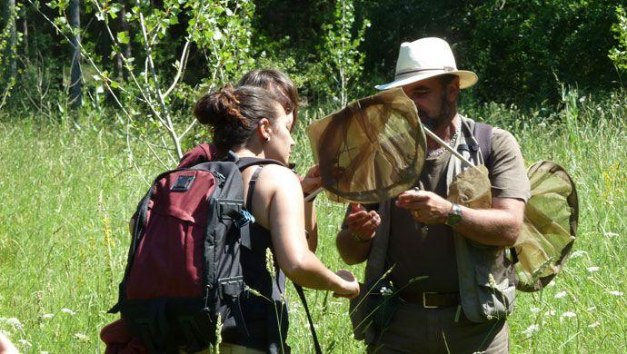 Prácticas de seguimiento de lepidópteros en Ribavellosa (La Rioja)
