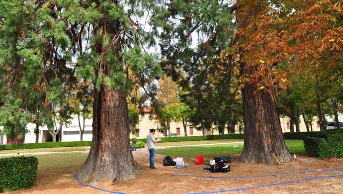 Revitalización Sequoyas Bodegas Bilbaínas