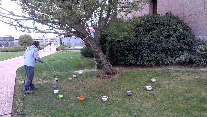 Floor insecticide injection for trees in European University of Madrid